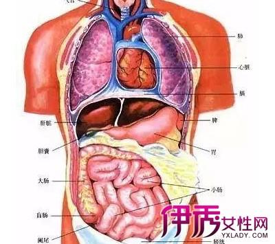 人体背部反射区图解 背部反射区有哪些呢