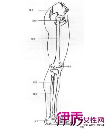 大腿神经分布图_小腿神经分布图-下肢神经支配分布图|小腿神经有哪些|小腿神经 ...