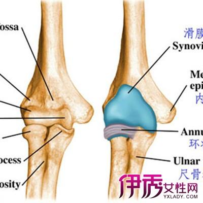 部研究右肘关节解剖图 教你4个方法缓解肘关节疼痛的症状