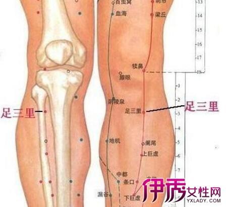 【膝盖穴位位置图】【图】膝盖穴位位置图介绍