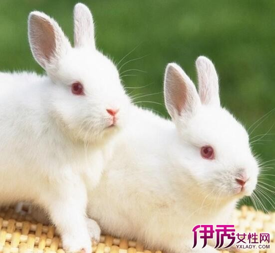 【图】什么食物没有寄生虫? 以兔子和老鼠为食的寄生虫最多吗?