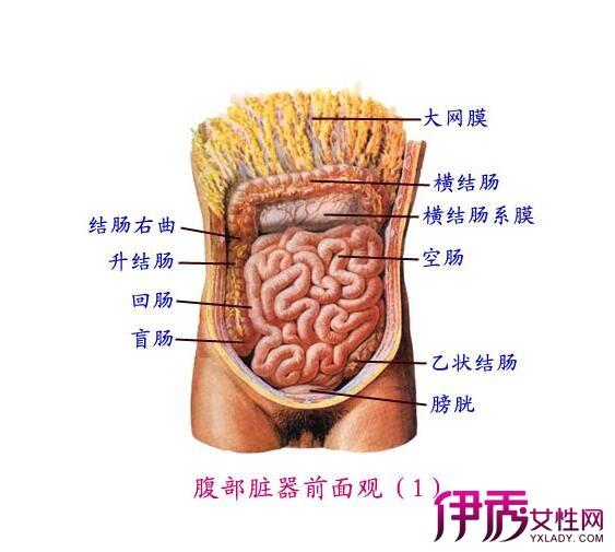 【腹泻拉水肚子咕咕叫】【图】腹泻拉水肚子咕