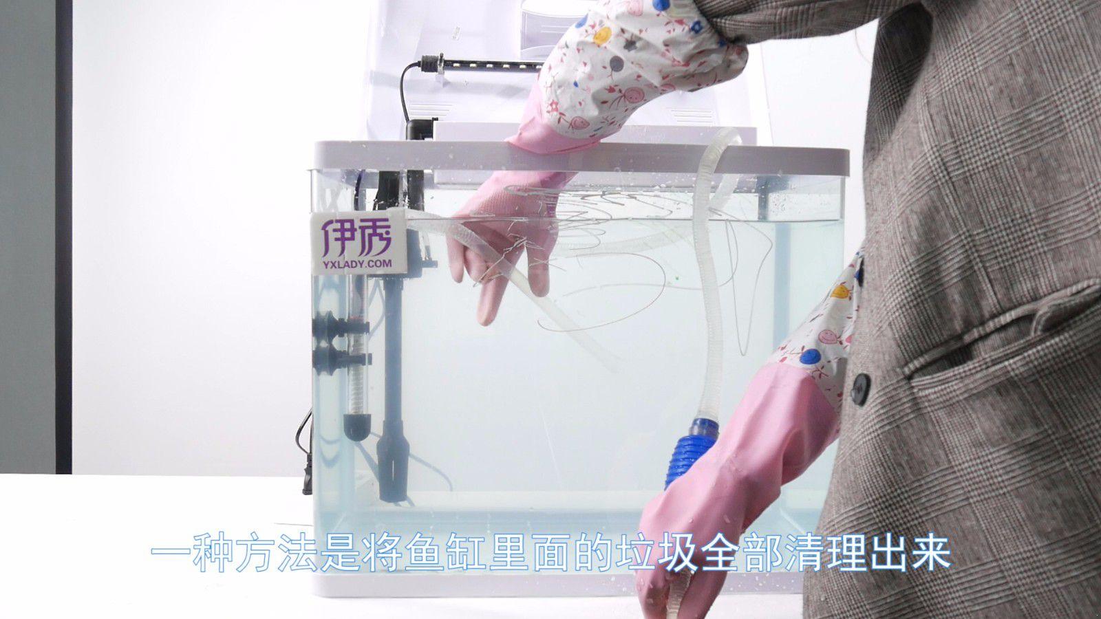 清理鱼缸的鱼种类_鱼缸底部鱼屎怎么清理 两种办法不妨试一试_伊秀视频|yxlady.com