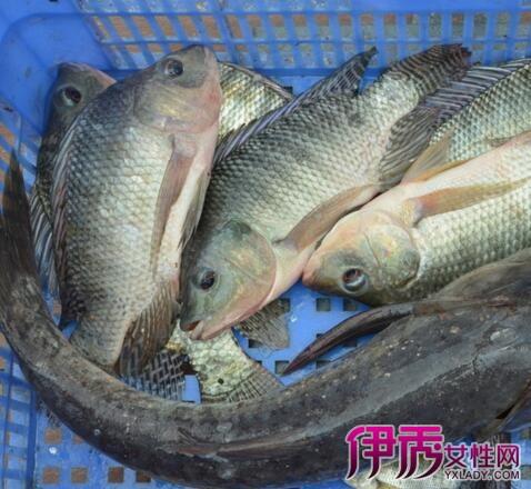 孕妇梦见很大的鱼在水里