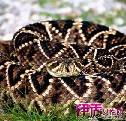 蛇钻进美女肚子的图片