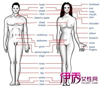 人体腹腔构造